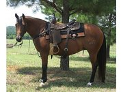 Healthy Horse For Sell