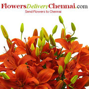 Flowers to color up in Chennai celebration