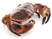 Ireland's Fresh and Tasty Shellfish Suppliers