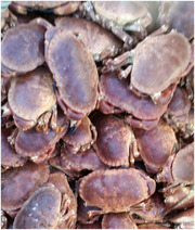 Ireland's Quality Brown Crab for Sale